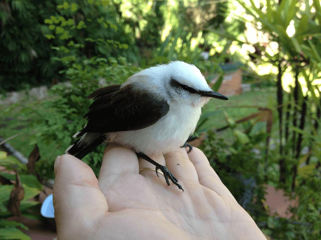 Pássaros Nativos Casa Caminho Corcovado